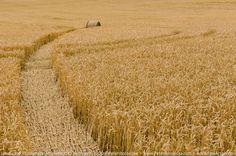 Landscape Encounters: Mr. Haystack's Incredible Journey #landscape #haystack #field #journey #wow