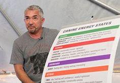 Cesar Millan explaining dog energy