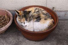 植木鉢とネコ8