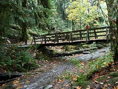 Twanoh State Park, a Washington State Park located nearby Bremerton, Gig Harbor and Port Orchard