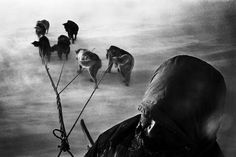 TINITEQILAAQ, Greenland—A hunter and his dogsled have been caught in a snowstorm on their way home. Usually this storm—called Piteraq—can be predicted by the shape of the clouds. But, as in this case, the hunters do not always get home in time, 2000. © Jacob Aue Sobol / Magnum Photos