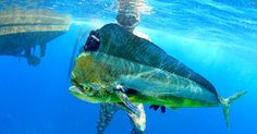 Spearfishing - A Guide to Spearfishing - The Nomad Trip