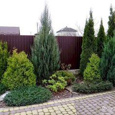 60 Beautiful Front Yards And Backyard Evergreen Garden Design Ideas - Gartengestaltung Evergreen Landscape, Evergreen Garden, Privacy Landscaping, Front Yard Landscaping, Landscaping Ideas, Arborvitae Landscaping, Florida Landscaping, Outdoor Landscaping, Landscape Plans