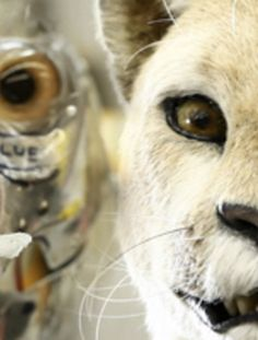How to Create Animatronic Animal Puppets - Stan Winston Academy