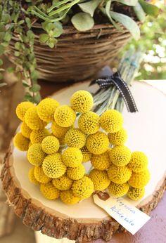 Billy balls / Crespedia Bunch 10 stems by on Etsy Sugar Flowers, Felt Flowers, Dried Flowers, Handmade Felt, Handmade Crafts, Wedding Bouquets, Wedding Flowers, A Todo Confetti, Billy Balls