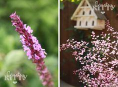 Countrykitty: Garden/Giardino