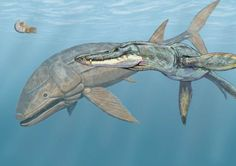The fearsome Liopleuredon rossicus, right, had a jaw nearly ten feet long. The Leedsichthys problematicus, left, was a bony fish that may have been even larger than it looked; some estimates put its maximum length at 53 feet. (Art: Dmitry Bogdanov/Creative Commons)