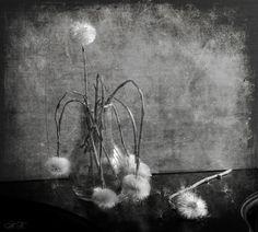 #still #life #photography • photo: соло | photographer: Н. button | WWW.PHOTODOM.COM
