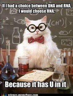 Science cat on RNA vs. DNA