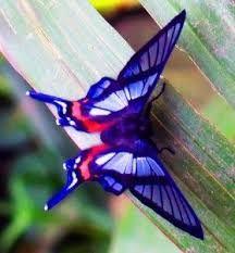 Resultado de imagen para mariposas exoticas de colores