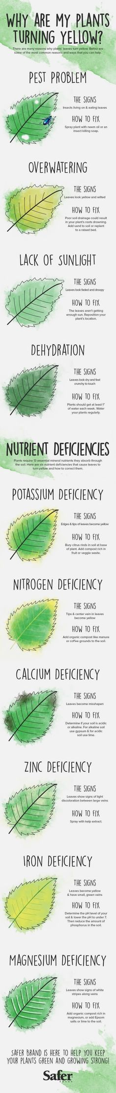 Why are my plants turning yellow? If your vegetable garden or house plants have gone from verdant to flavescent, it could be a sign of health issues like too much water or too few nutrients. A new infographic offers tips for getting to the root of the problem.  #VegetableGarden