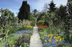 80429 - 01 Spring in the High Garden at Great Dixter. Tulips 'West Point' with forget-me-nots in the foreground. Flagstone path