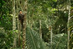 Jacare / Nestor climbing Canopy, Climbing, Rock Climbing, Mountaineering, Canopies, Hiking