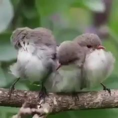 ow nice are the natural sounds of these beautiful birds chirping? 🐦   📷 Photos and video by   🗺 The Berry Farm  Cute Little Animals, Cute Funny Animals, Cute Dogs, Most Beautiful Birds, Pretty Birds, Beautiful Creatures, Animals Beautiful, Birds Voice, Funny Parrots