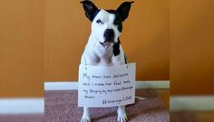 Rescue Dogs Wear Signs Showing How They Help Their Owners