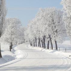 Zimní krajinka