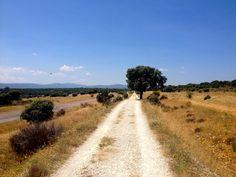 El Camino y el Arbol.
