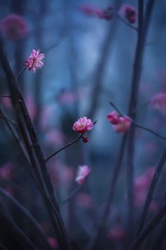 plum blossom by Mei xiang on Blur Background Photography, Blur Photo Background, Picsart Background, Wallpaper Nature Flowers, Beautiful Flowers Wallpapers, Flower Phone Wallpaper, Desktop Background Pictures, Light Background Images, Photo Backgrounds