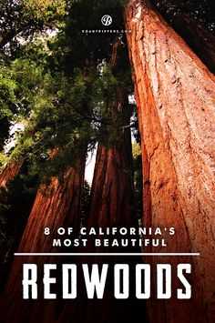 Eight jaw-dropping photos of the most beautiful redwoods and sequoias in California.