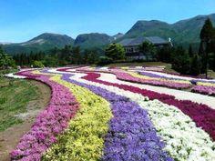 Flower Park of Kuju, Oita, Japan 大分 久住 くじゅう花公園