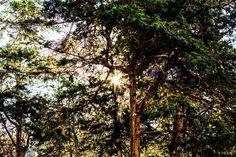 Raleigh NC North Carolina scenery light sun trees contrast green greenery GloryRoze Photography photography #wednesday #wednesdays #light #sun #nature #tree #trees #theweekend #wednesdayfeels #naturephotography #nikon #nikonphotography #nikonphotographer #raleigh #raleighnc #northcarolina #nc #ncphotographer #ncphotography #lightinthedark #raleighphotographer #raleighphotography #outdoors #sunlight