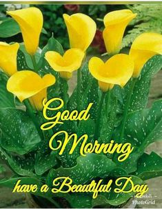 Cute Good Morning, Good Morning Flowers, Good Morning Wishes, Good Morning Quotes, Blue Orchids, Yellow Flowers, Colorful Flowers, Wednesday Morning Images, Good Morning Images