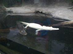 NC Aquarium at Fort Fisher - Kure Beach, NC - Kid friendly activity... - Trekaroo
