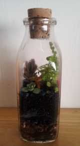 How To Make A Terrarium  Here are some great projects on making your own terrarium in a variety of different styles from a dish terrarium to a soda bottle terrarium or animal terrarium.
