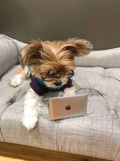 Cute Little Puppies, Cute Dogs And Puppies, Cute Little Animals, Cute Funny Animals, Corgi Puppies, Yorkshire Terriers, Teacup Yorkie, Yorkie Puppy, Biewer Yorkie