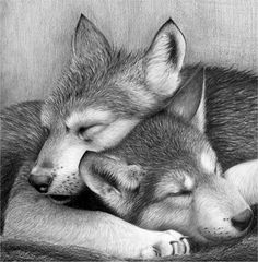 Pups wolf wolves by waderra.deviantart.com on @deviantART