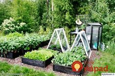 My Garden - Sisustuskuva jäseneltä idahhh - StyleRoom. Potager Garden, Garden Pool, Garden Landscaping, Balcony Gardening, Patio Pergola, Backyard Plan, Wooden Garden, Raised Garden Beds, Dream Garden