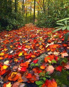 Lindy Run Trail, Fall