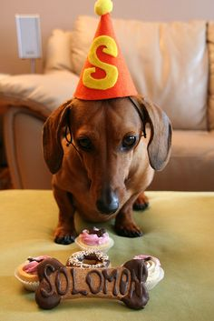 there is no way my doxies would be able to do this - that doggie bone would be wolfed down in about 8 seconds!----love the hat! I feel a doggy birthday party coming on!