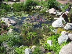 Gartenteich selber bauen - Steine für mehr Halt und als schöne Dekoration