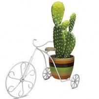 2969 Cactus Plants, Planter Pots, Bicycles, Cacti, Cactus