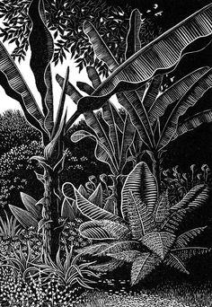 Sheila Watkins - Bananas at Overbecks - woodcut