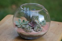 succulent terrarium 039-1