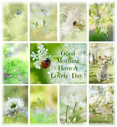 Have a Lovely Day Spring is on its way!!