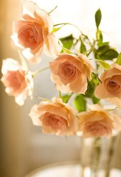 apricot colored roses~Ana Rosa