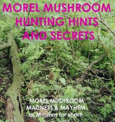 Image Morel Mushroom Hunting Hints & Secrets (Morel Mushroom Madness & Mayhem) Leonard E. Pease by Leonard E. Moral Mushrooms, Edible Mushrooms, Wild Mushrooms, Stuffed Mushrooms, Mushroom Spores, Mushroom Cultivation, Mushroom Grow Kit, Edible Wild Plants, Mushroom Hunting