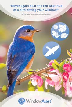 SAVE THE BIRDS With A Window Decal Or To Prevent Them From - Window stickers to deter birdsstickers to prevent birds flying into windows popular bird
