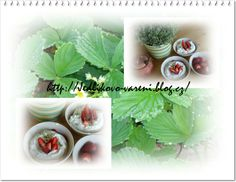 Jedlíkovo vaření: ovoce, jahodová pěna #jahody #strawberies #dezert