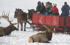 Sleigh rides in Wyoming    Most sleigh rides combine travel over a forest trail and through an open meadow, a bucolic reference to simpler days of conversation and conveyance. (Electronic gadgets don't work so well when it's below zero outside.) Sleigh rides in Jackson Hole add a Western twist in the form of thousands of elk, one of the largest herds in the world.