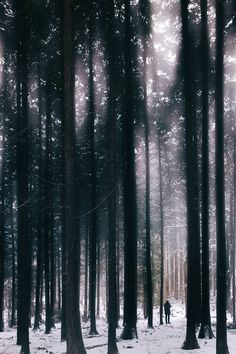 banshy: Frozen Forest // Dennis Skyum