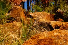 Plenty of bush walks, hiking trails in Dunsborough. The light down here enhances all the rich natural colours. You'll capture some great pic's.