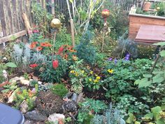 Bunte Herbstblätter Kraut, Bunt, Plants, Excuse Me, Fall Leaves, Pictures, Plant, Planets