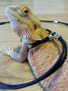 Reptile harness 6 ft. by WalkingWithDragons on Etsy