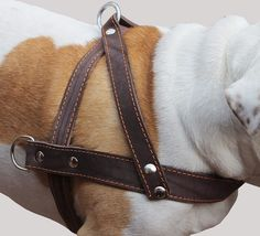High Quality Genuine Brown Leather Dog Pulling Walking Harness XLarge. 35'-39.5' Chest, 1.5' Wide Straps >>> Startling review available here  (This is an amazon affiliate link. I may earn commission from it)
