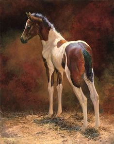 """""""Pawnee"""", artist Bonnie Marris' own American Paint horse. Published by The Greenwich Workshop, Inc. Painted Horses, Horse Drawings, Animal Drawings, Beautiful Horses, Animals Beautiful, Art Occidental, American Paint Horse, Horse Artwork, Rare Animals"""