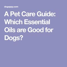 A Pet Care Guide: Which Essential Oils are Good for Dogs?